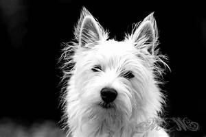 Schwarz Weiß Bilder Tiere : tiere manuel murgas fotografie ~ Markanthonyermac.com Haus und Dekorationen