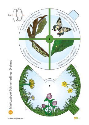 schmetterling falten kindergarten anleitung 378 besten schmetterling bilder auf schmetterlinge bildung und insekten