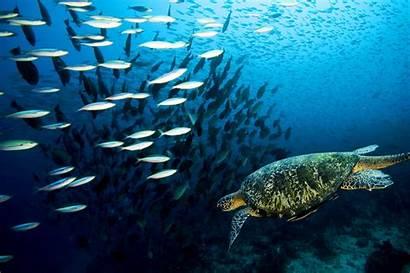 Turtle Sea Wallpapers Underwater Ocean Colorful Fish