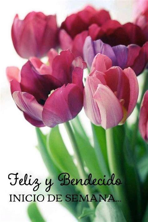 Pin de Carmen Obando en BUEN DIA Flores tulipanes
