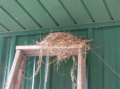 far side of fifty robin s nest