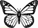 Butterfly Outline Cartoon Coloring Monarch Clip Tattoo Printable Simple Drawing Colouring Cycle sketch template