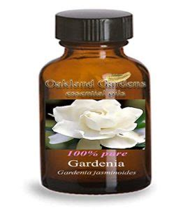 Gardenia Extract Benefits by Gardenia Essential Benefits For Your Needs