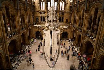 Museum Natural History Gifs London Moving