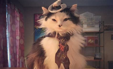 15 Cat Cowboy Hat Pictures That Will Melt Your Heart