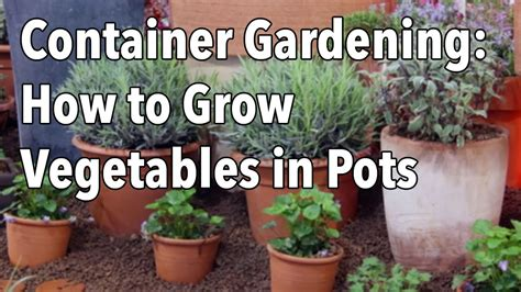 container gardening top tips for success