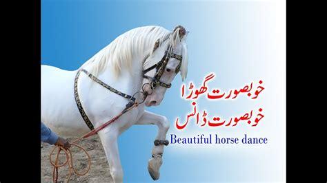 horse dance pakistan