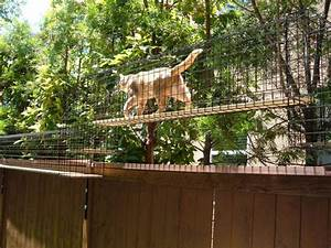 Enclos Exterieur Chat : habitat installed in san marcos ca cat habitats pinterest cat habitat cat and outdoor cats ~ Preciouscoupons.com Idées de Décoration