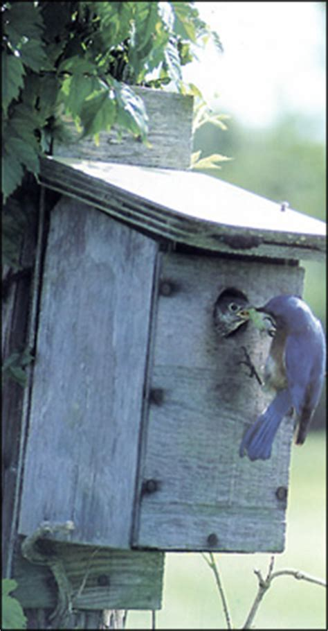 tpwd bird houses introducing birds  young naturalists