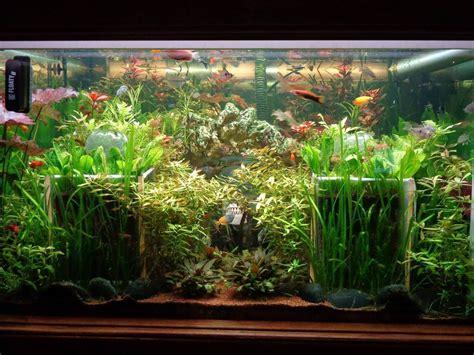 aquarium en eau douce