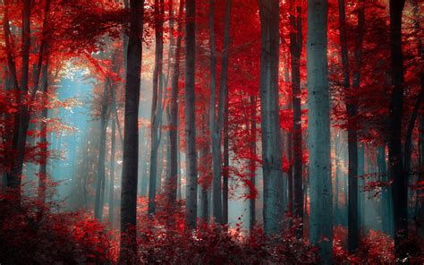 Red, Forest, Nature Wallpapers Hd / Desktop And Mobile