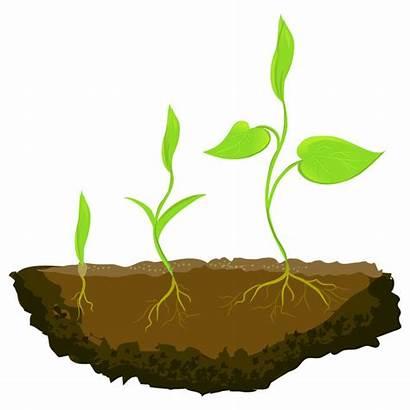 Growing Plants Ground Vector Three Illustration Plant