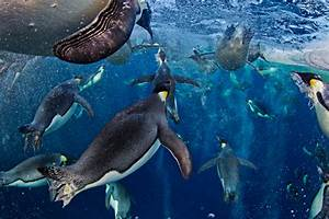 Photos: emperor penguins take first place in renowned ...