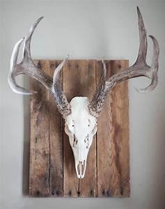 Best deer skull decor ideas on skulls
