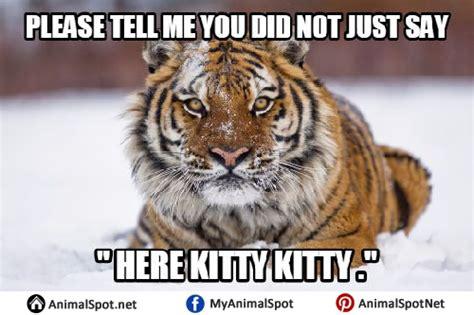 Terrible Tiger Meme - tiger memes