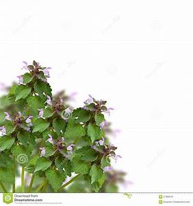 Wild flowers in a corner stock image. Image of decor ...