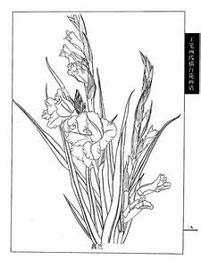 17 Best images about Flowers drawing of gladioli on ...