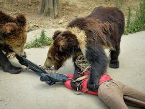 Sloth Bear Attack | www.pixshark.com - Images Galleries ...
