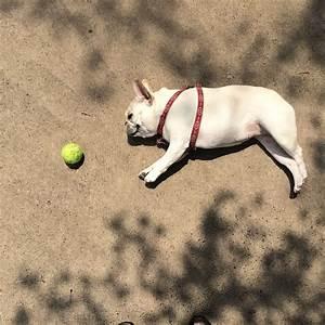 Comment Savoir Si Son Catalyseur Est Bouché : vacances d t comment savoir si mon chien est bien hydrat entretenir son chien wamiz ~ Gottalentnigeria.com Avis de Voitures