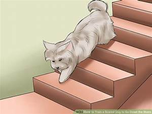 How to train a scared dog to go down the stairs 8 steps for Going down