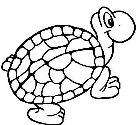 turtles coloring pages  printable turtle coloring
