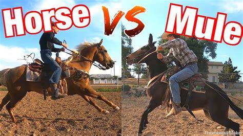 horse mule vs race yard faster