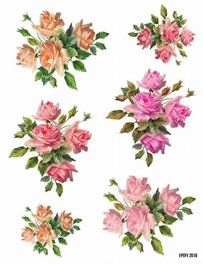 Roses Rose Pretty Clipart Clip Collage Sheets