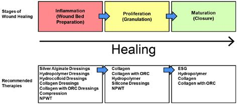 Stages Of Wound Healing And Recommended Therapies Npwt