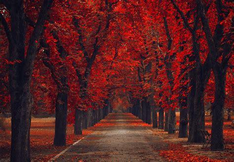 fondos de pantalla parque otono arboles avenida rojo