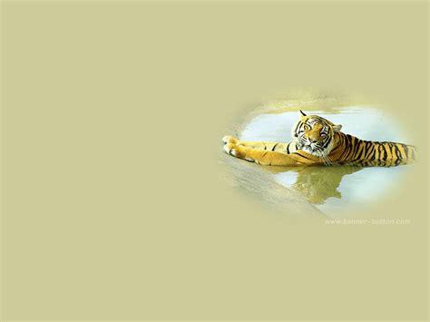 Animated Tiger Wallpaper - animated tiger wallpaper wallpapersafari