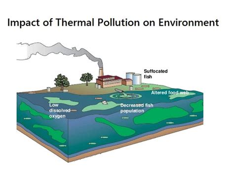 thermal pollution effects  health  environment