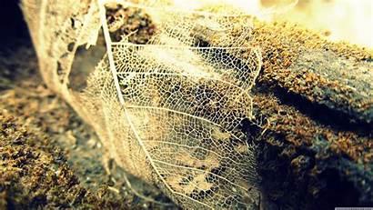 Leaf Transparent Uhd Wallpapers Skeleton Autumn Wallpaperswide