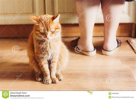 Red Cat Sitting Near Female Foots Royaltyfree Stock