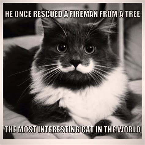 Mustache Cat Meme - image gallery hipster cat mustache