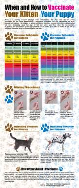 cats schedule when and how to vaccinate your cat and infographic