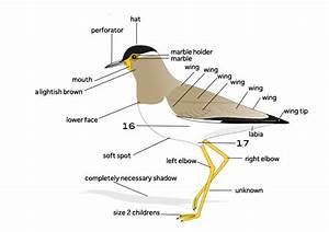 Bird Diagram To Label