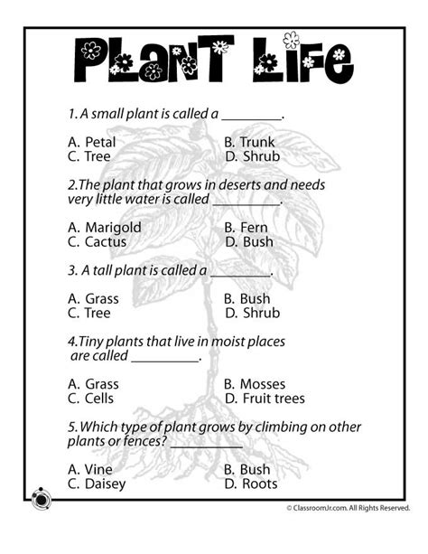 science worksheets for grade 1 on plants homeshealth info