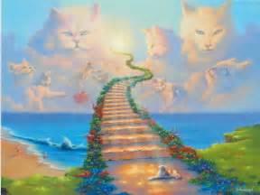 cat heaven pet sympathy cards sympathy cards cat sympathy cards