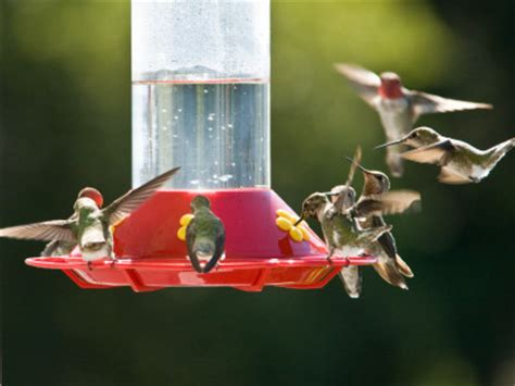 Backyard Bird Shop Locations by Humdinger Hummingbird Feeder Lochte Feed General Store