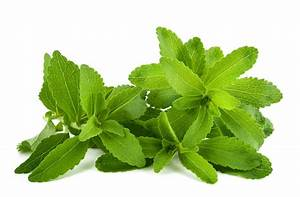 Is Stevia Healthy? | Elana's Pantry