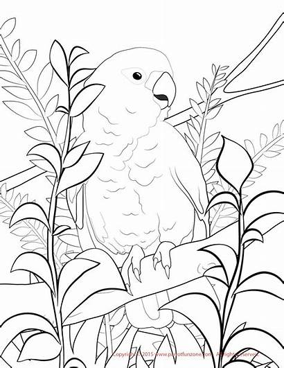 Cockatoo Goffin Coloring Goffins Fun