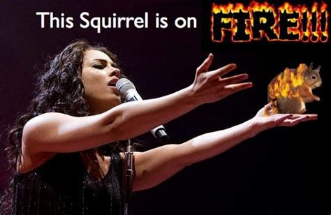 Alicia Keys Meme - this girl is on fire meme well this squirrel my sick squirrel obsession pinterest funny
