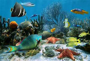 Interesting and Educative Water Animals Information for Kids  Aquatic
