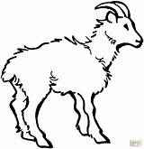 Coloring Goat Domestic Printables Printable Goats Billy Drawing 92kb 1385 Popular Results sketch template