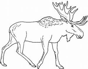 Elch Vorlage Kostenlos : ausmalbilder von elch ausdrucken malvorlagen kostenlos ~ Lizthompson.info Haus und Dekorationen