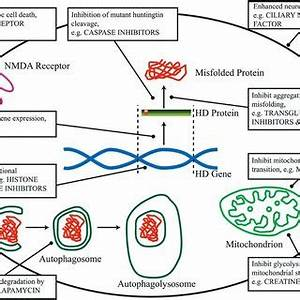 (PDF) Does loss of the normal protein function contribute ...