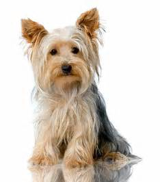 Names Small Dog Breeds as Puppies