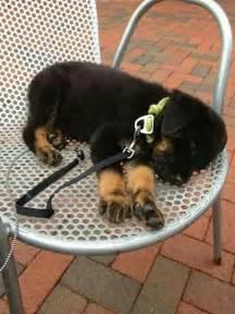 Rottweiler Girl Dog Names