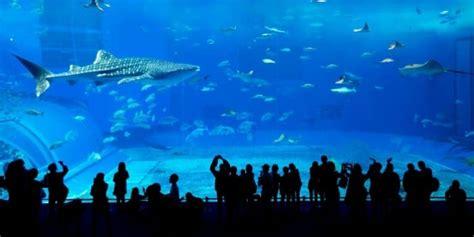 welches glas für aquarium aquarium test 2019 die besten aquarien im vergleich