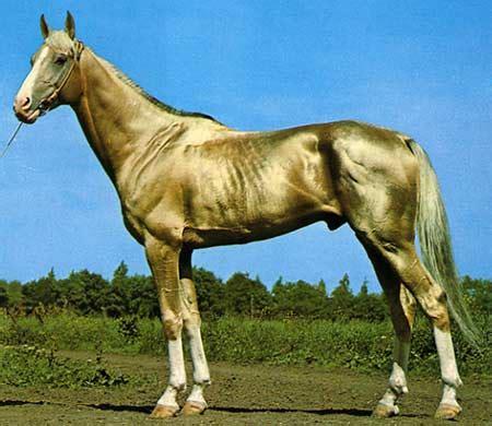 nez perce horse dreamer horse farm